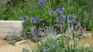 blue agapath